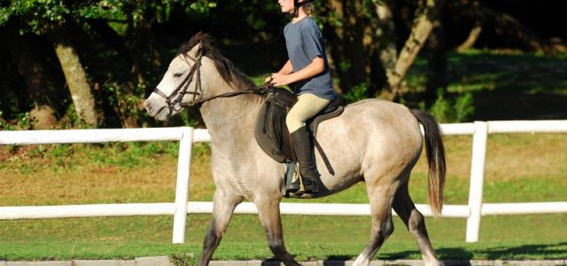 Riding Stable insurance